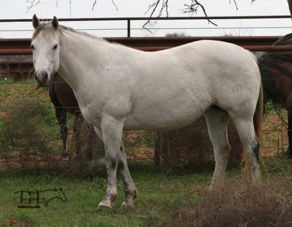 Quarter Horses for sale in Texas  HorseClicks