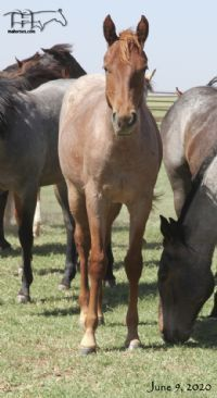 Funny B Dandy Girl's 2019 Filly