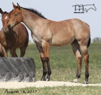 Hancocks Red Hot's 2017 Filly