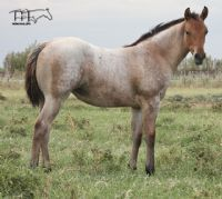 Montoya Sierra's 2016 Filly