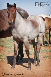 Annabone's 2016 Filly