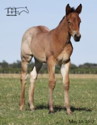 Annabone's 2017 Filly