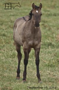 Divi It Up's 2016 Filly - SALE PENDING