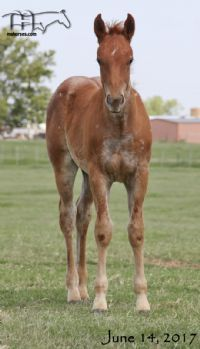 Funny B Dandy Girl's 2017 Colt