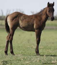 Kerri Blue's 2020 Filly