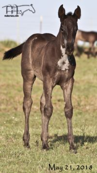 Miss Mucha Blue's 2018 Blue Roan Filly