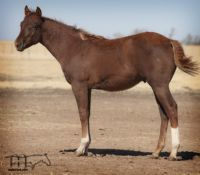 Miss Smotrix's 2019 Red Colt