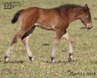 Royetta's 2018 filly