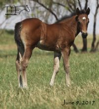 Smokin Rose's 2017 Colt