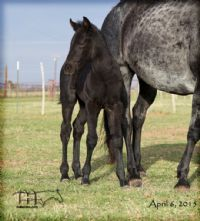 Blue Breeze's 2015 Colt