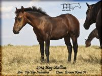 BROWN KERRI'S 2014 Colt