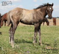 Divi It Up's 2016 Filly