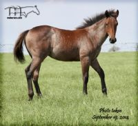 DOCS DRIFTEN HEART'S 2014 FILLY