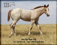 FQHR LADY BLACKBURN'S 2014 FILLY