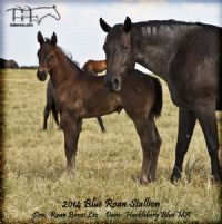 HUCKLEBERRY BLUE'S 2014 COLT