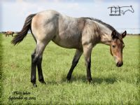 LIMITED MOONETTE'S 2014 FILLY