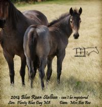 MISS BEE BEE'S 2014 COLT