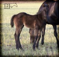 MISS NAD'S 2014 FILLY