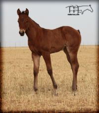 MISS ROY'S 2014 FILLY