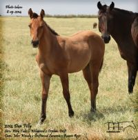 MISS WOODY'S 2014 FILLY