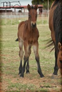 Royetta's 2015 filly
