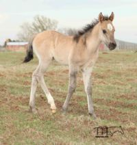 Smokin Hot Hayes's 2015 filly