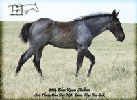 WYO ONE SOCK'S 2014 COLT