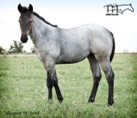 Drifting Lou's 2016 Filly
