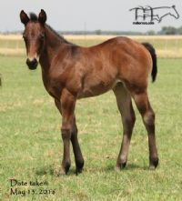 Limited Moonette's 2016 Filly