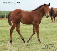 Miss Bee Bee'sFilly
