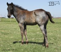 Miss Black Socks' 2016 Colt