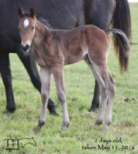 Maybelle's 2016 Colt