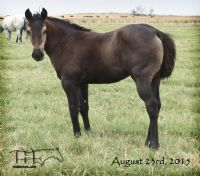 Miss Smotrix' 2015 Roan Filly